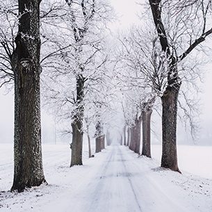 A road lined by trees covered in snow.